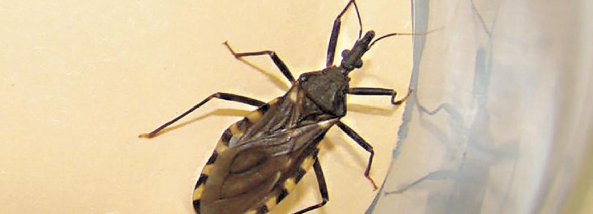 Imagen de la noticia Investigadores de la UBA trabajan en el desarrollo de una vacuna contra el Mal de Chagas