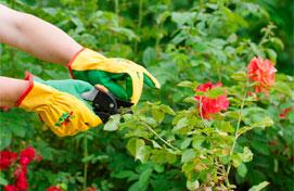 Imagen ilustrativa noticia Cursos de jardinería