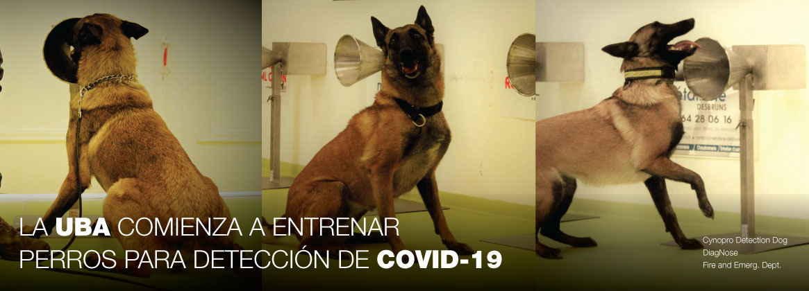 Imagen de la noticia Entrenamiento de perros para detectar el virus