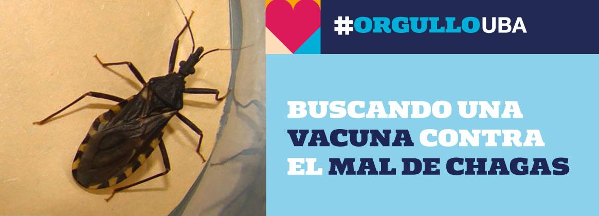 Imagen de la noticia Buscando una vacuna para el Mal de Chagas
